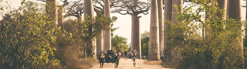 Madagaskar – beseda a film (Ústí nad Labem)